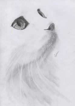 Cat - 09-08-2011 -