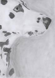Dalmatian - 17-08-2011 - by jeroenw93