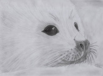 Baby Seal - 03-12-2011 -