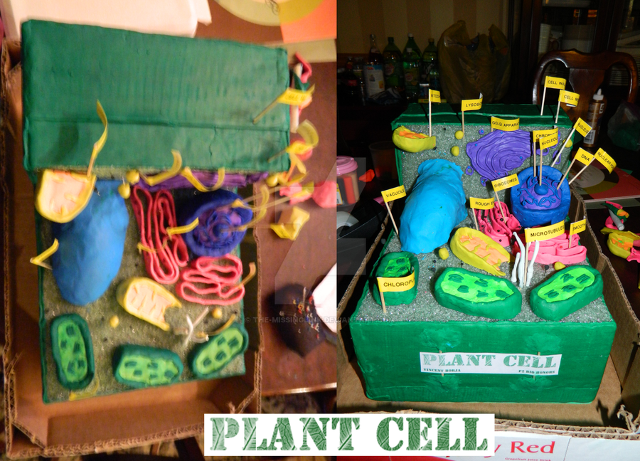 Biology 3D Plant Cell Project by The-MissingLink on DeviantArt