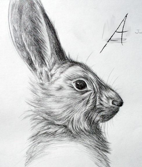 Hoback Rabbit by CinnamonSoldier