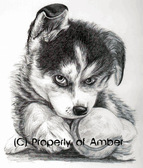 Husky by CinnamonSoldier