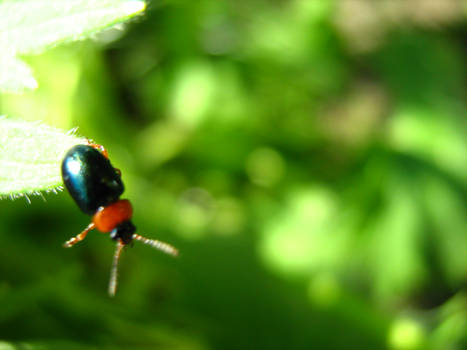 robak : bug