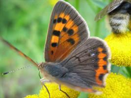 butterfly : motyl
