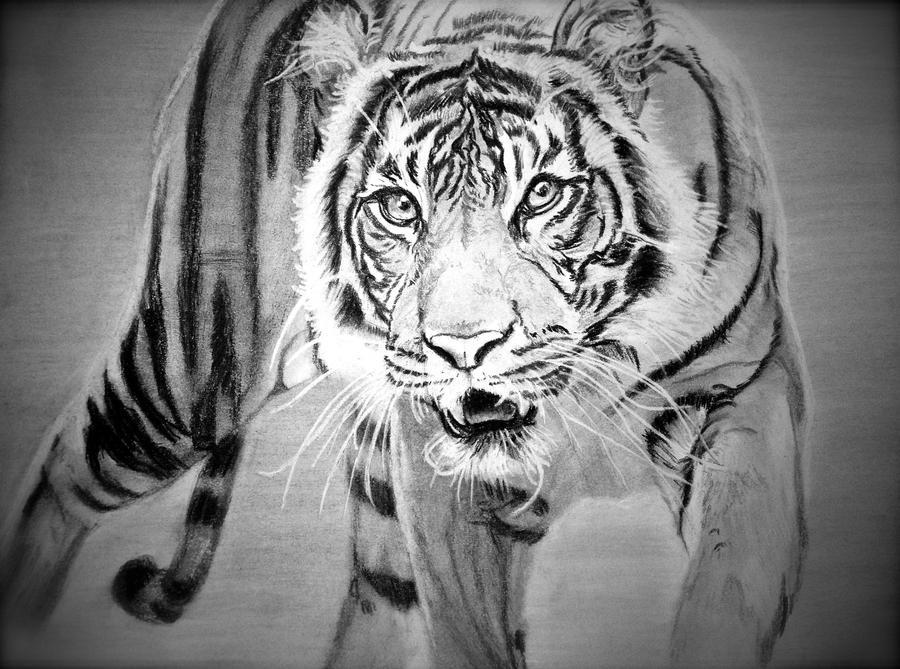 Siberian Tiger by rimrimrim