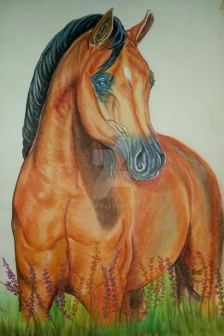 Arabian beauty by rimrimrim