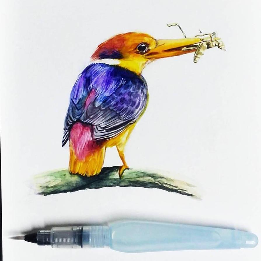 Oriental Dwarf Kingfisher by rimrimrim