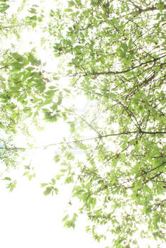Sky of Leaves (4)