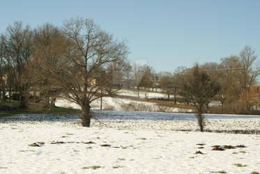 Snowed in (6) - Lone Trees