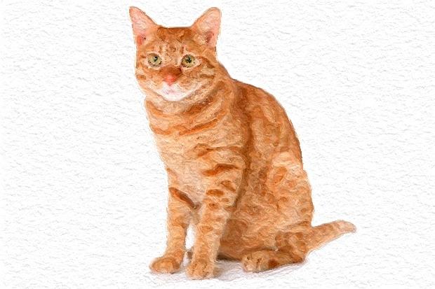 картинки для детей кошки с котятами