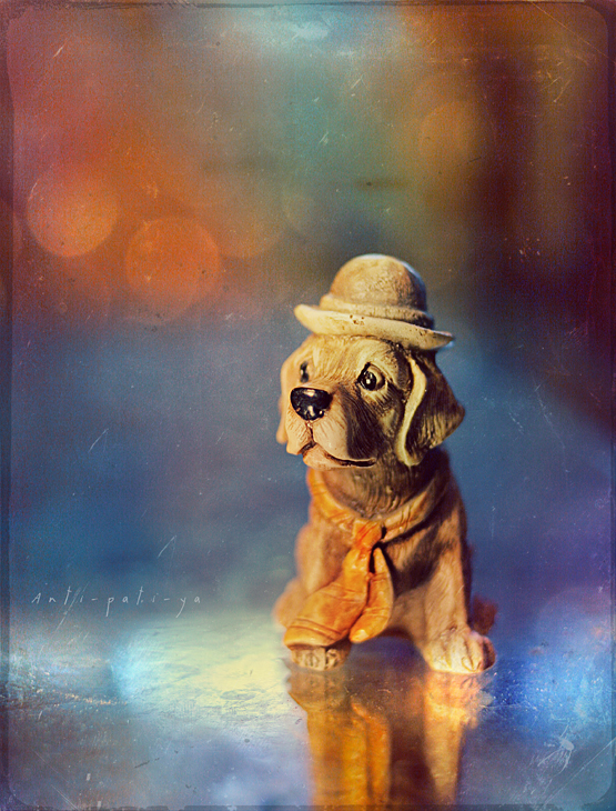 Dog with a hat and a tie by Anti-Pati-ya