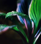 violet and emerald by Anti-Pati-ya