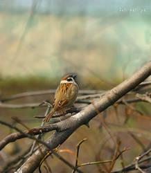 Sparrow by Anti-Pati-ya