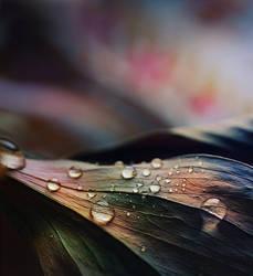 Lilac by Anti-Pati-ya