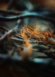 wire by Anti-Pati-ya