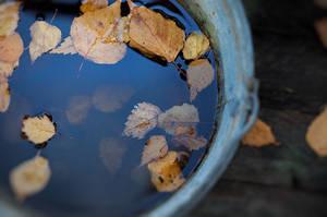 leaves in water by Anti-Pati-ya