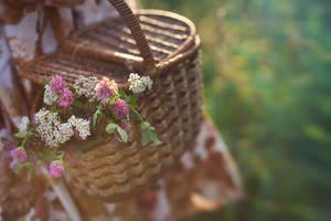 basket by Anti-Pati-ya