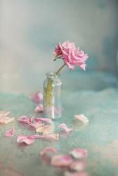 rose in blue 02 by Anti-Pati-ya