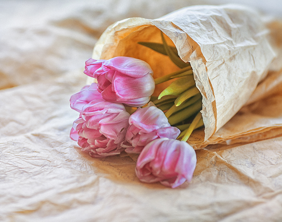tulips123 by Anti-Pati-ya