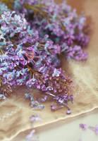 .lilac by Anti-Pati-ya