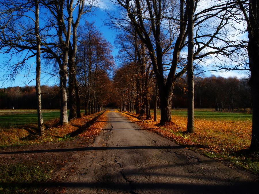 Autumn road by morgy23
