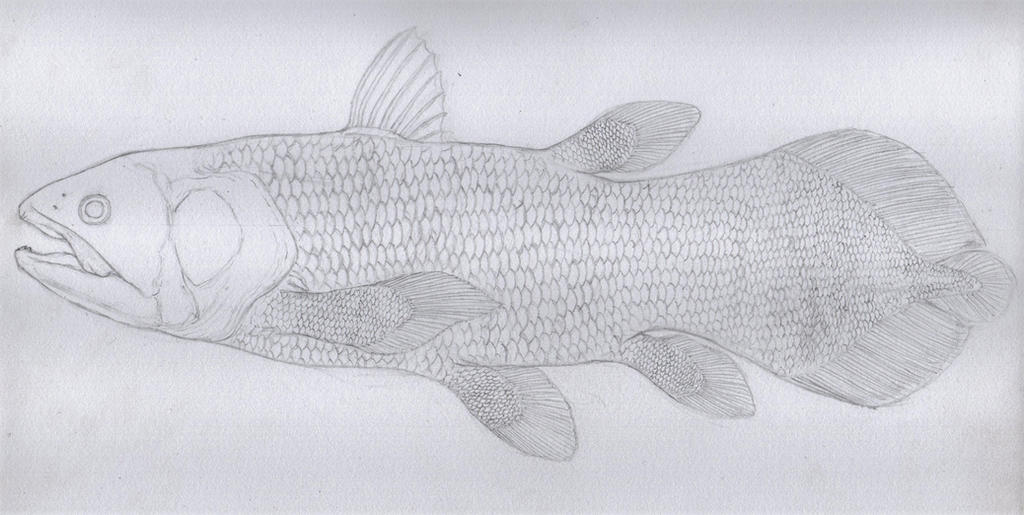 Coelacanth WIP by Animalistic-Artworks