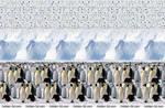 Emperor Penguins. Stereogram