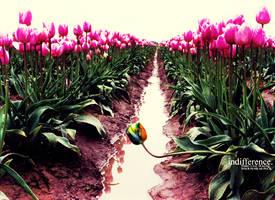 indifference. by bindyeye