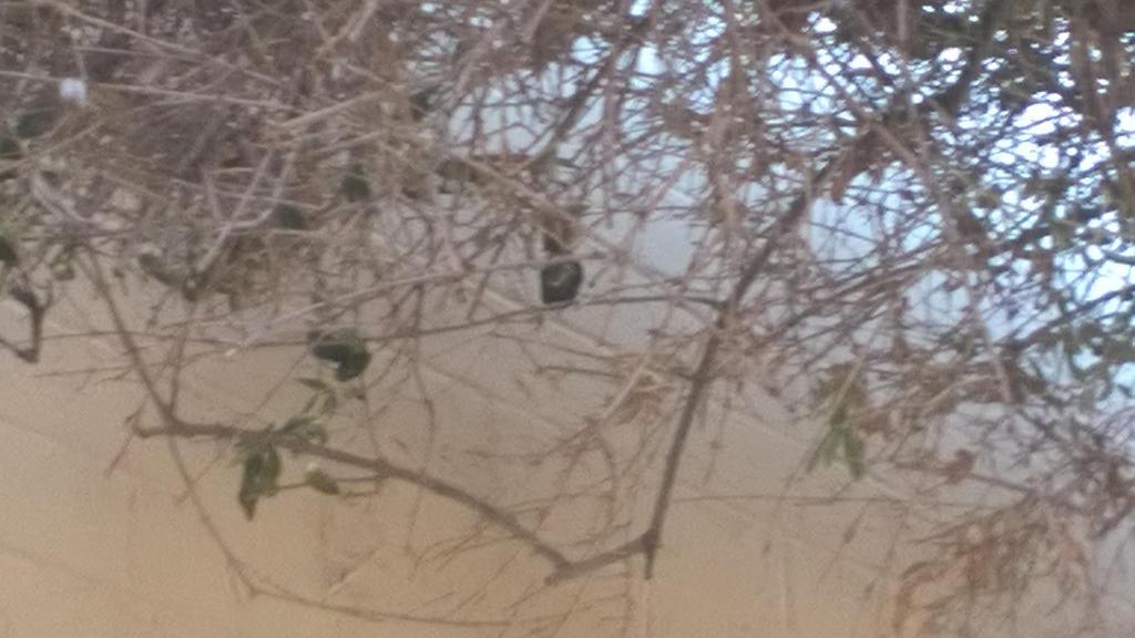 Hummingbird in a tree by artisticwonder24