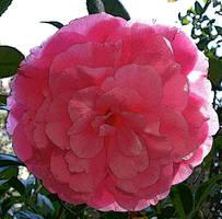 Pretty Pink by impaz0330