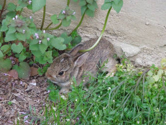 A Rabbit in the Weeds by crotafang