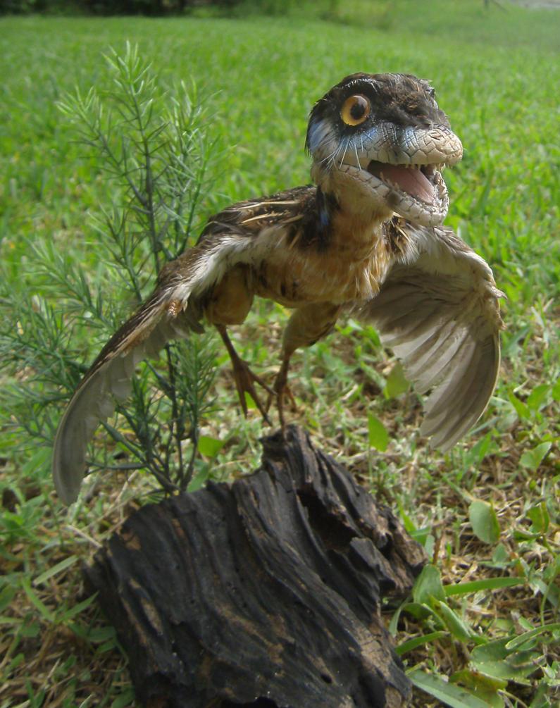 Eosinopteryx by Book-Rat