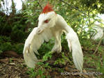 Albino Microraptor