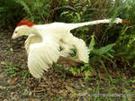 Albino Microraptor 2