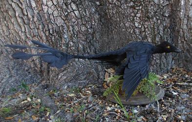 Microraptor by Book-Rat