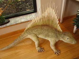 Dimetrodon by Book-Rat
