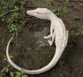 Albino Terrestrisuchus