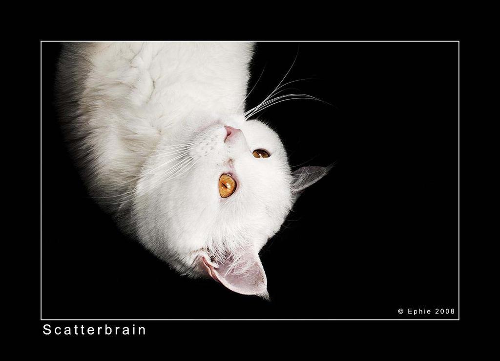 Scatterbrain by Epheme