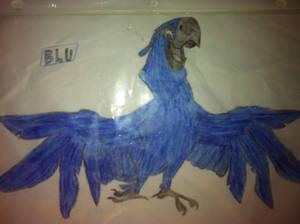 Blu the macaw