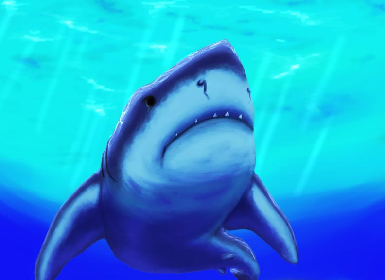 Fucking Shark 114