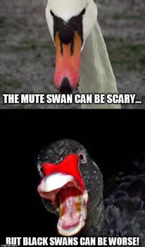 Some swans are worse than others