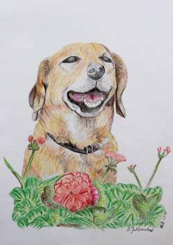 Grandmother's dog Max 2