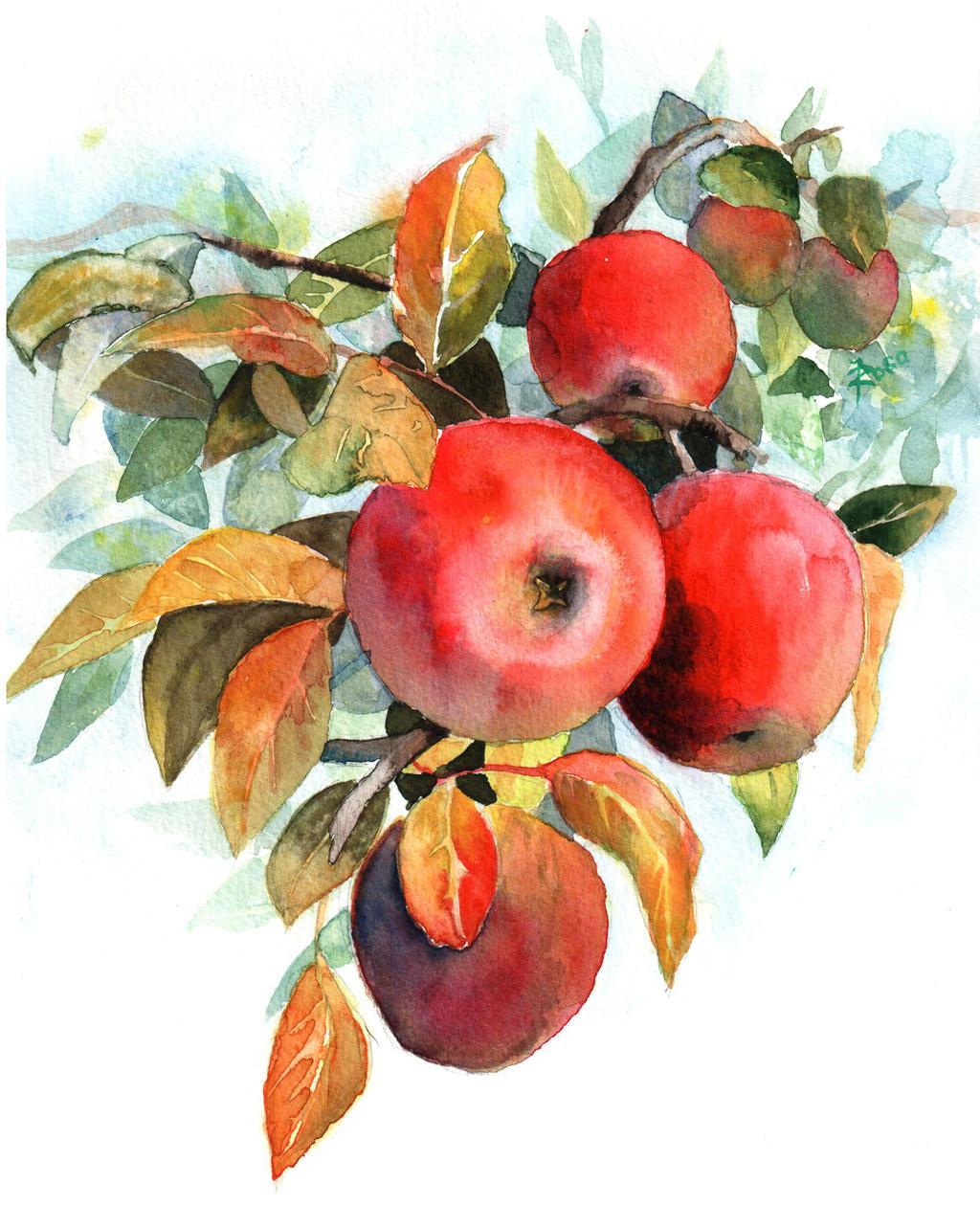 Apples by JoaRosa