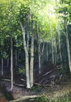 Forest in Gdynia Orlowo