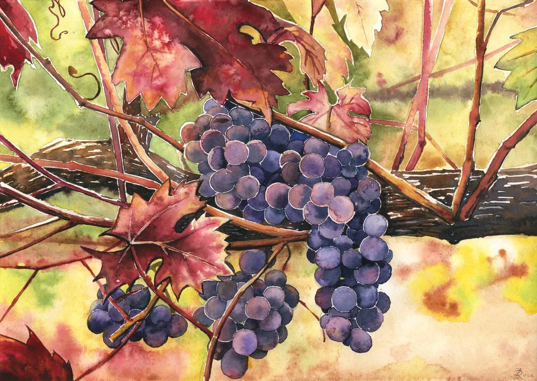 Grapes by JoaRosa