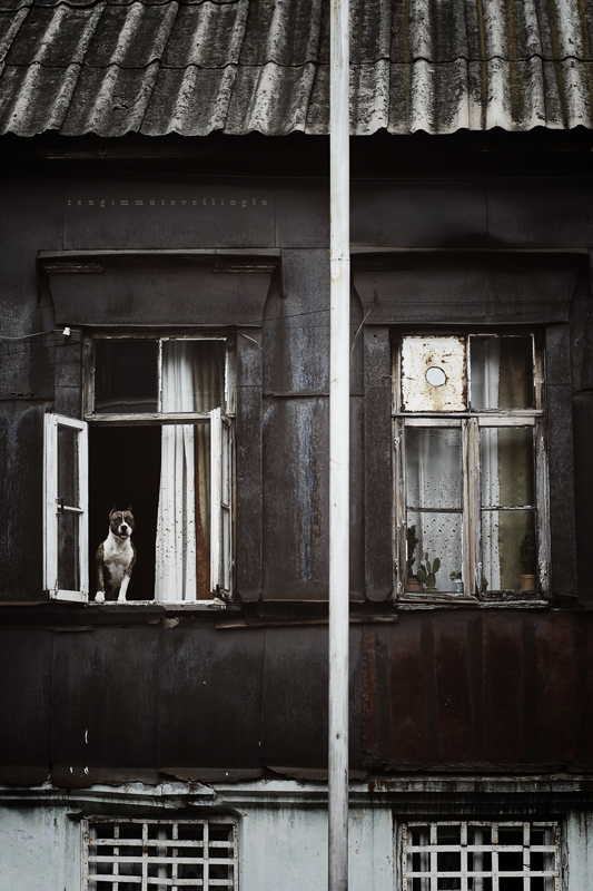 Prozori koji govore Sleeping_bulldogs_lie_by_ennil