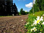 the path less taken by maddi-jane
