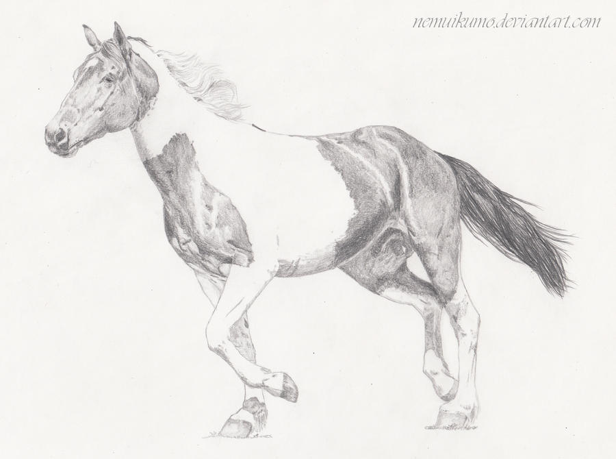 Paint Horse By Nemuikumo