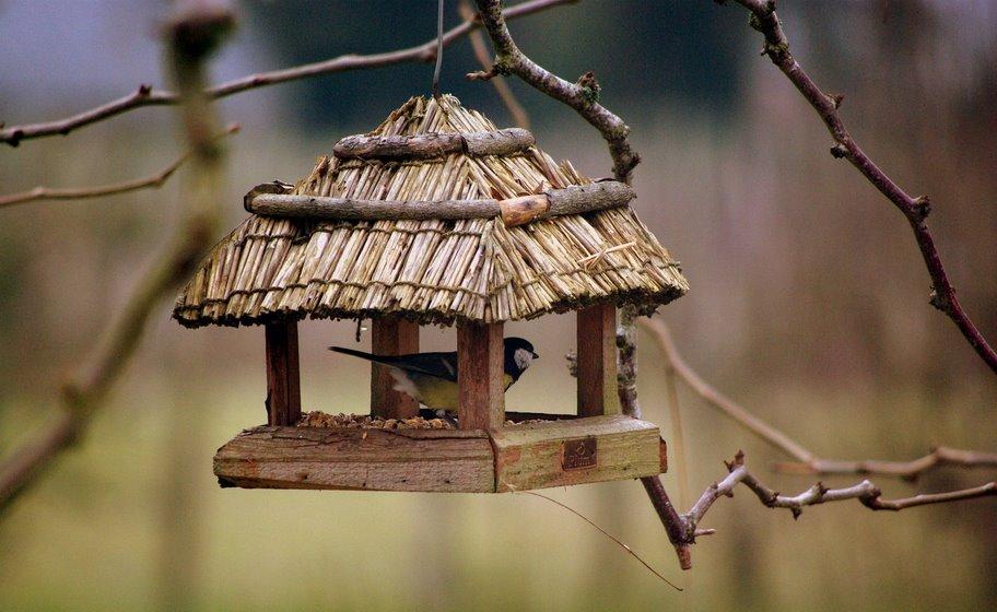 La cabane au fond du jardin by ptinono on deviantart - Cabane au fond du jardin zimboum villeurbanne ...