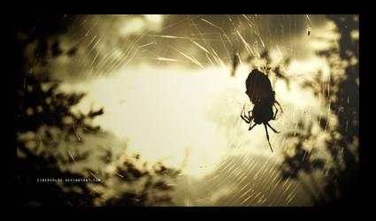 Golden Itsy Bitsy Spider